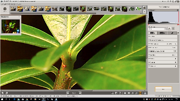 Olympus Viewer 3 RAW Development window