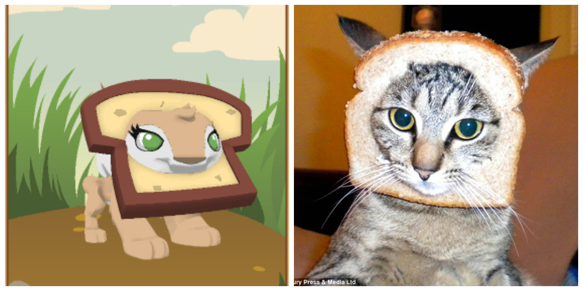 A comparison between the Bread Hat and the cat breading meme. 3f6fbfc6e