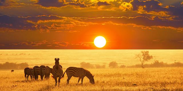 Nằm ở phía tây Nam Phi, Namibia là hoang mạc rộng gần 2000 km với sa mạc trải dài vô tận, với những đụn cát vàng ngất ngưỡng cùng sự góp mặt của nhiều loài động vật hoang dã ngao du trên những triền đồi tít tắp.