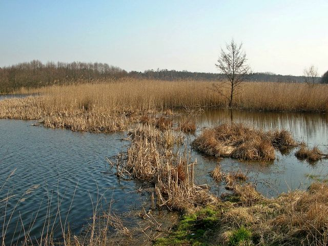 rezerwaty przyrody, ptaki wodne, jeziora