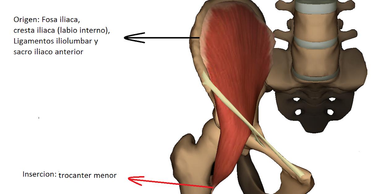 Vistoso Cresta Ilíaca Ornamento - Imágenes de Anatomía Humana ...