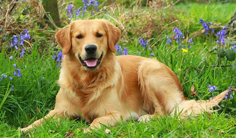 jenis anjing pemburu yang andal