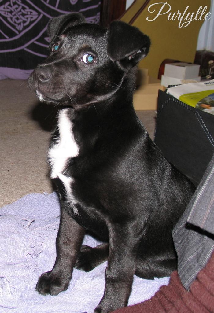 Handsomest puppy ever