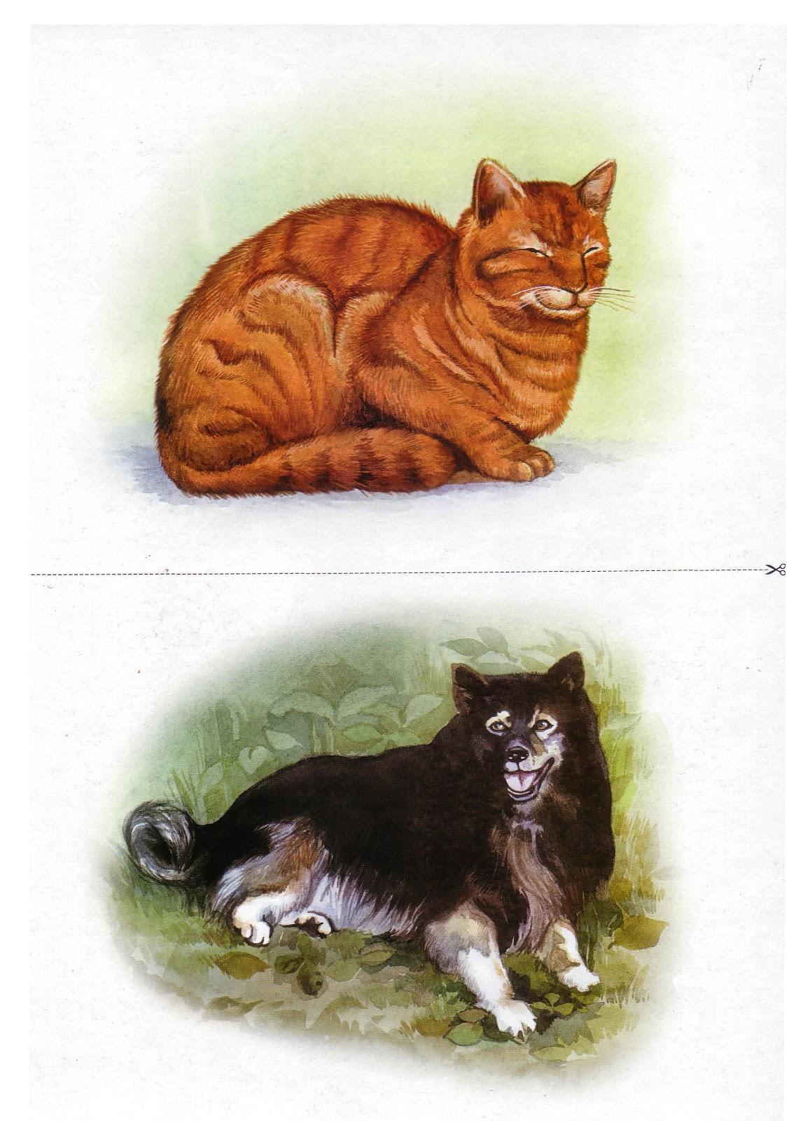 Картинки и иллюстрации с изображением жилища животных называется