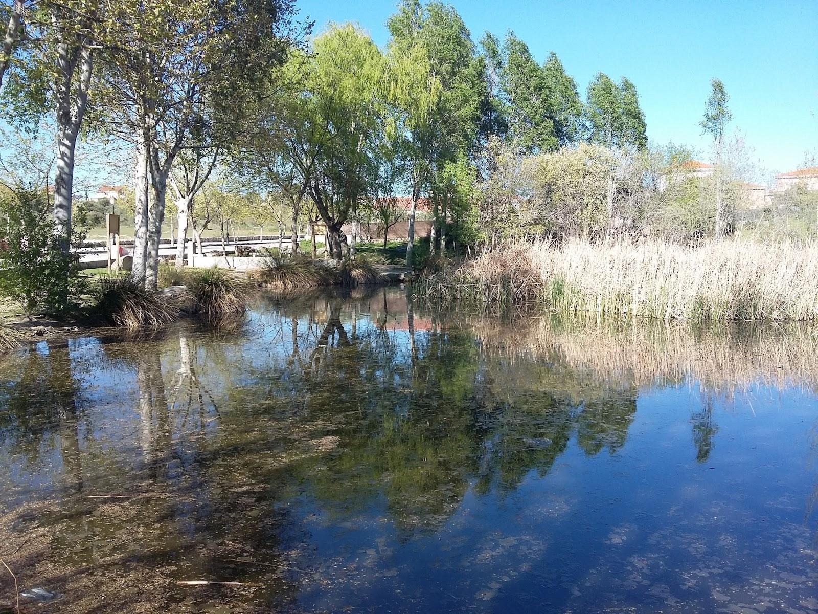 Laguna del Pozairón (Chapinería)