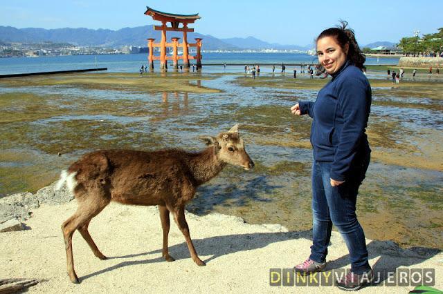 Ciervo de Miyajima