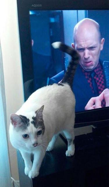 """20 chú mèo bị chụp ảnh """"dìm hàng"""" chuẩn tới từng tích tắc"""