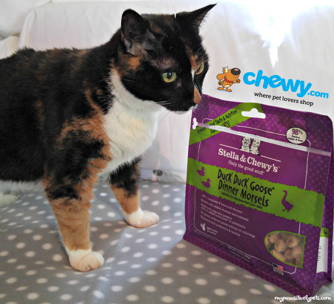 Stella Chewys Freeze Dried Raw Cat Food From Chewycom