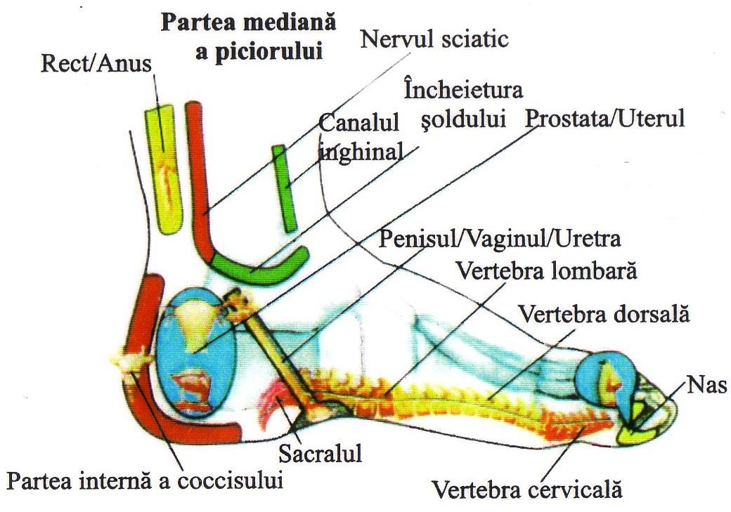 Dureri articulare laba piciorului