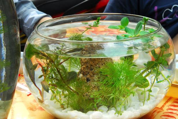 Hướng dẫn những bước ban đầu với việc nuôi cá cảnh ở bể trong nhà