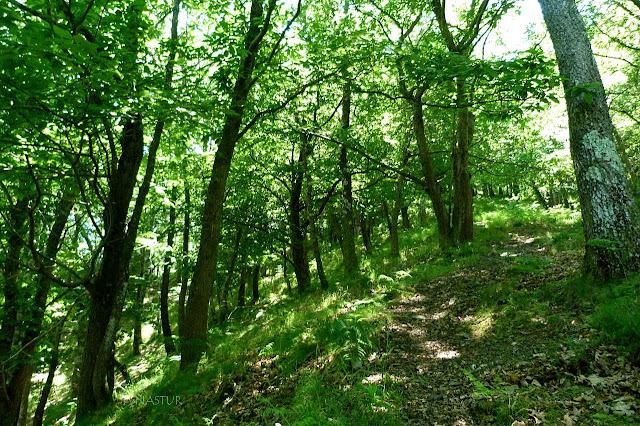 Bosque subiendo a La Sierra del Crespón