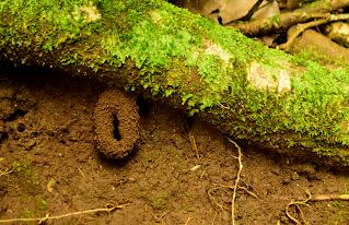 ant nest enterance