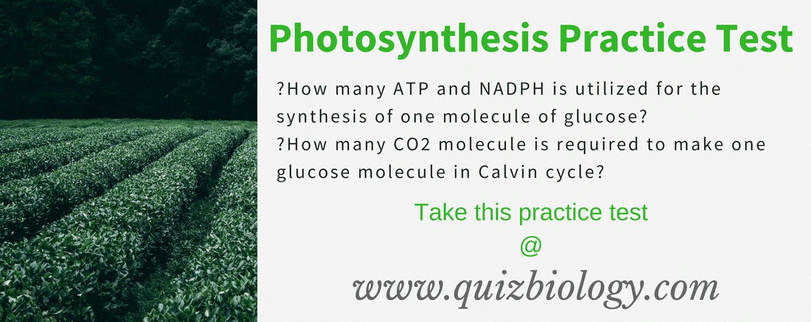 Biology Multiple Choice Quizzes: Photosynthesis Practice Test
