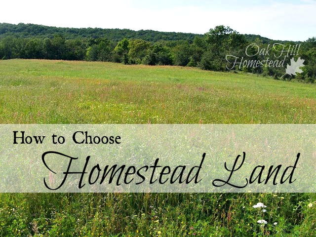 how to choose homestead land oak hill homestead