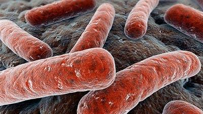Wabah-Wabah Penyakit Paling Mematikan Di Dunia