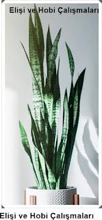 Işığa İhtiyaç Olmadan Yetişen Salon Bitkileri nelerdir?  Bakımı 6