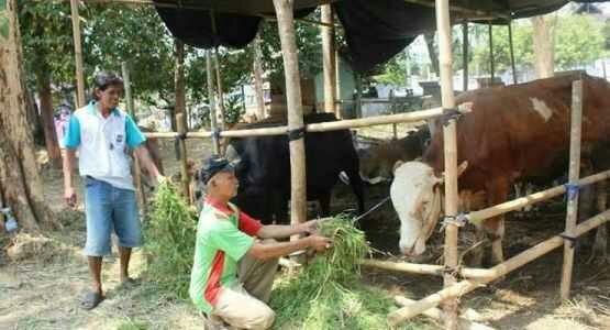Jelang Idul Adha, Penjualan Hewan Kurban Terus Turun