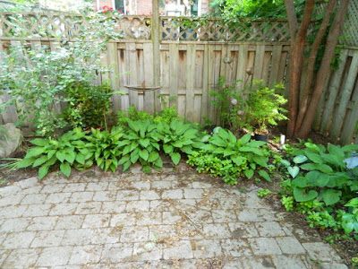 Toronto Cabbagetown shade garden makeover before by Paul Jung Gardening Services