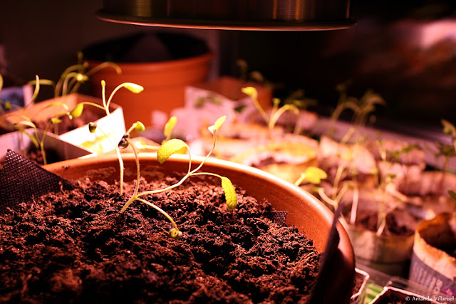 Indoors grow light for vegetable and herb seedlings