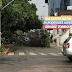 Árvore tomba na av. Rodrigues Alves próximo a Clínica Pedro Cavalcanti.