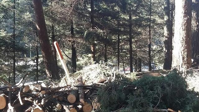 Destruyen bosque para favorecer a la constructora de Enrique Peña Nieto ¡DIFUNDE!