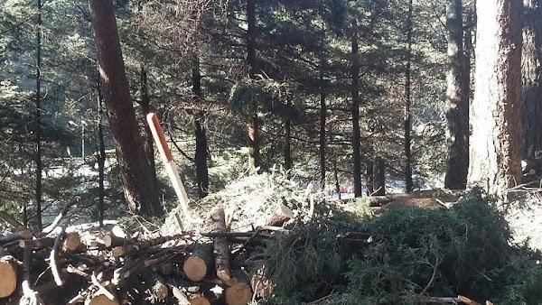Mientras nos distraen con Rafael Márquez, Destruyen bosque para favorecer a la constructora de Enrique Peña Nieto ¡DIFUNDE!