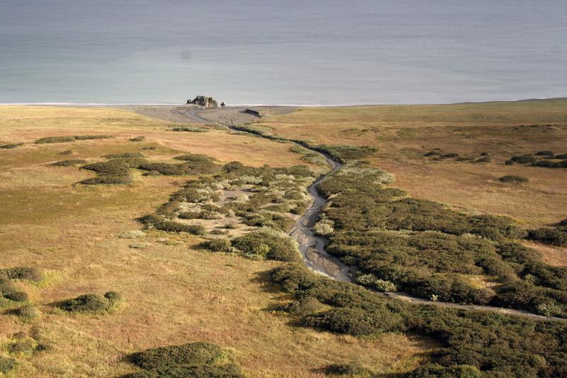 мыс камчатский тундра тихий океан