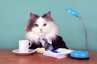 How to Manage Your Time: Lessons from the Cat