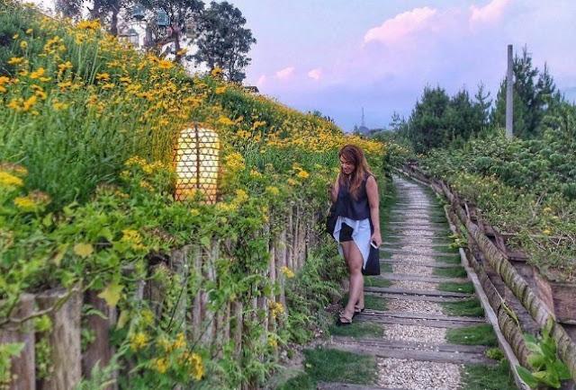 Menyejukan Diri di Rainbow Garden, Hamparan Bunga Warna-Warni