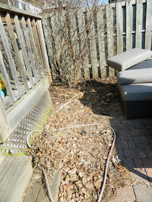 Paul Jung Gardening Services a Toronto Gardening Company The Junction Spring Backyard Garden Cleanup Before