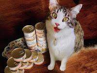 Cat Food Wet vs Dry