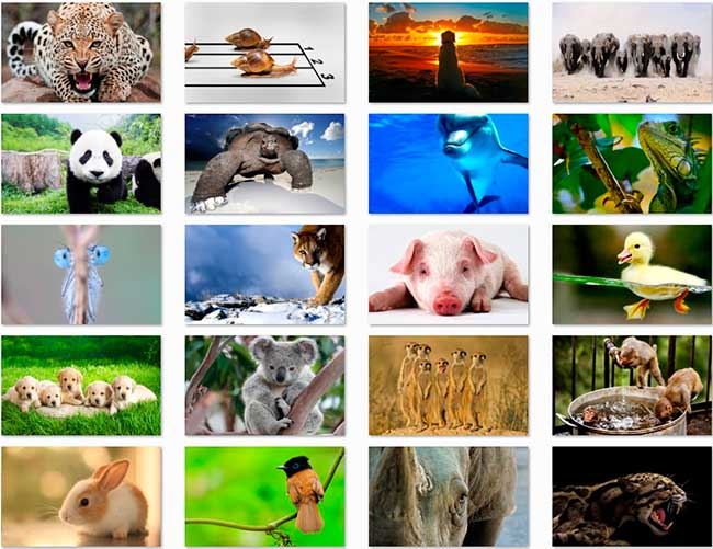 100 Animal HD Papéis de Parede Preview 03 por Saltaalavista Blog