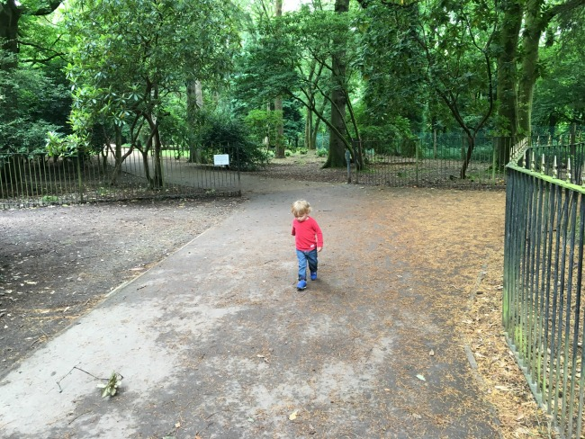 toddler-on-path-at-Cefn-Onn-park