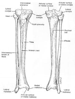 Radiology (kawasan radiasi): Fraktur Cruris Pada TibiaFibula