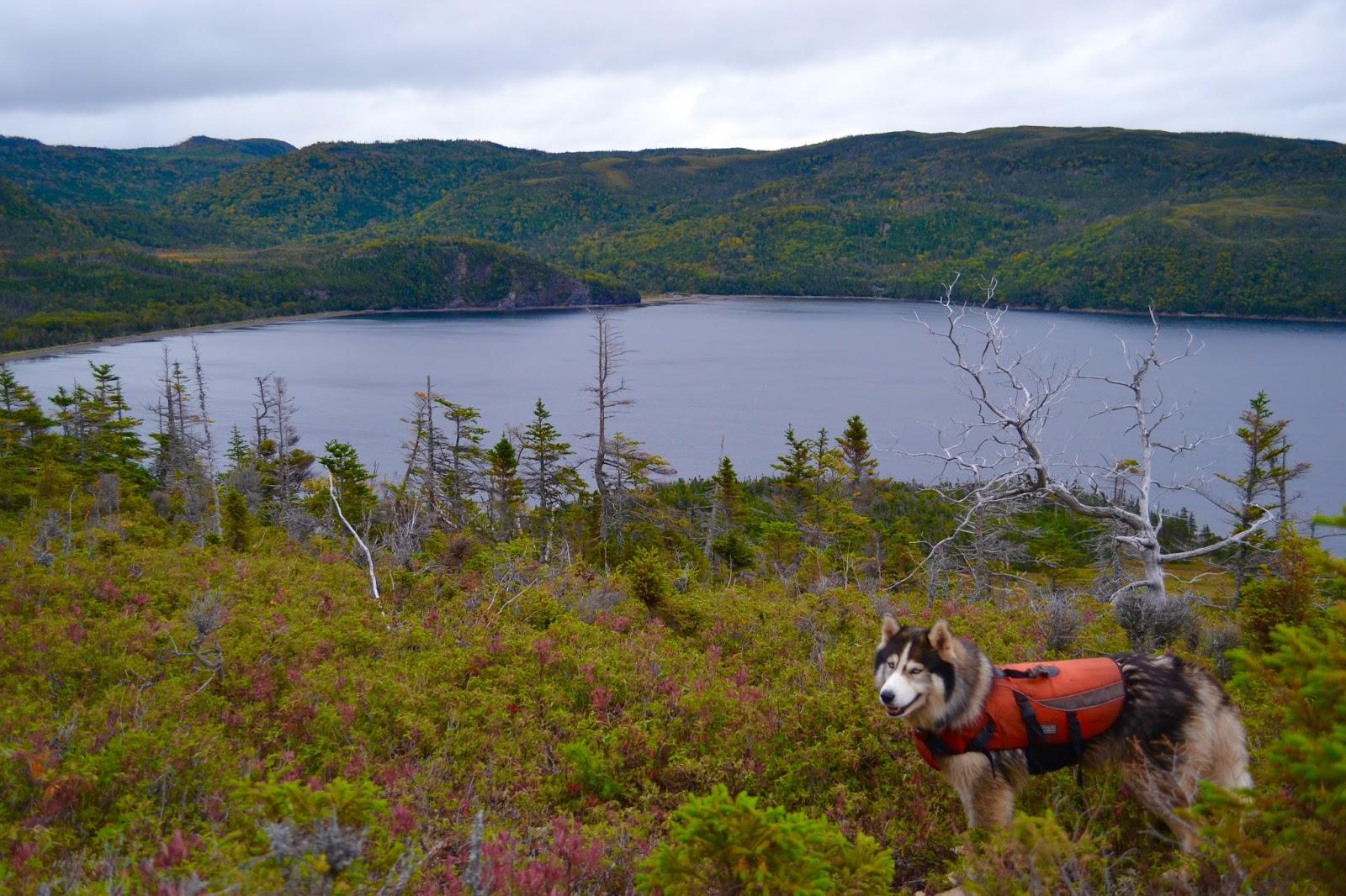 Image For Moose Hunting In Newfoundland On Sunday