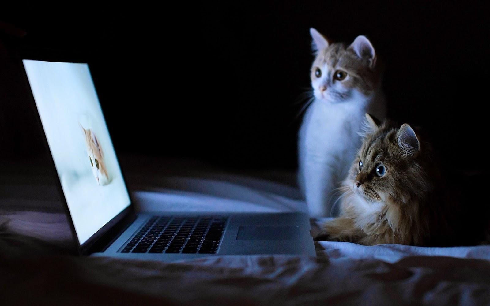 Kumpulan Gambar Lucu Binatang Lagi Maen KomputerJago TawA