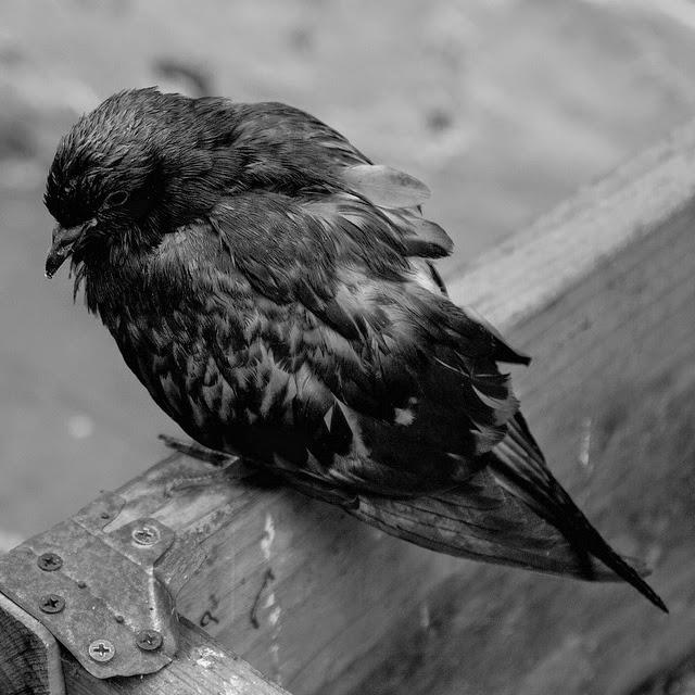 sad birds