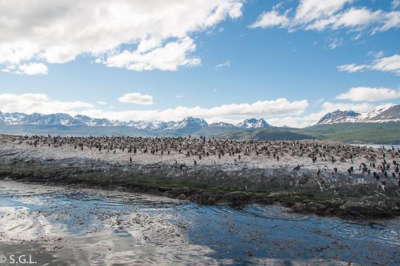 Isla de los pajaros en Ushuaia. Argentina