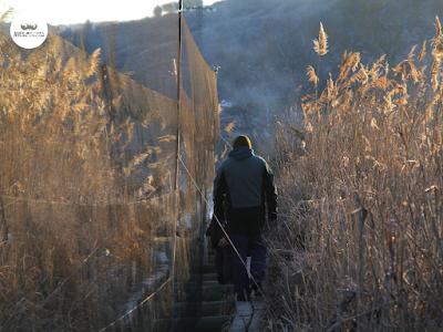 Al amanecer y con las redes montadas se recogen las primeras aves.