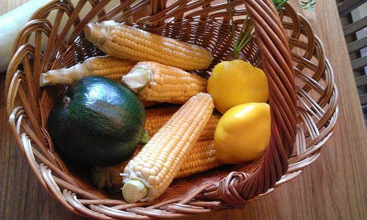 Maissin Kasvatus Suomessa
