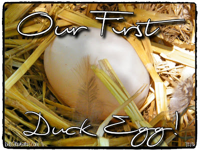 Our First Duck Egg!
