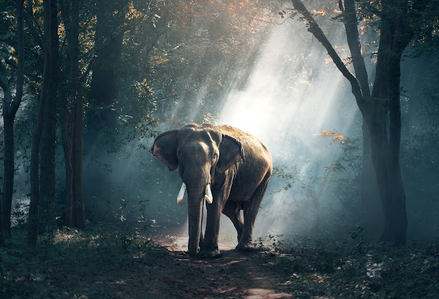 Elephant at forest image