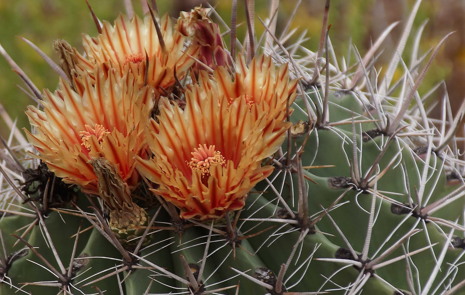 Four Things About The Phoenix Desert Botanical Garden