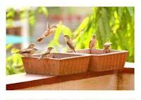 teracotta bird bath