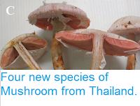 http://sciencythoughts.blogspot.co.uk/2015/02/four-new-species-of-mushroom-from.html