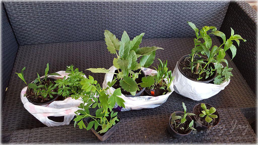 Garten Und Mehr sternensinn garten und mehr pflanzenflohmarkt