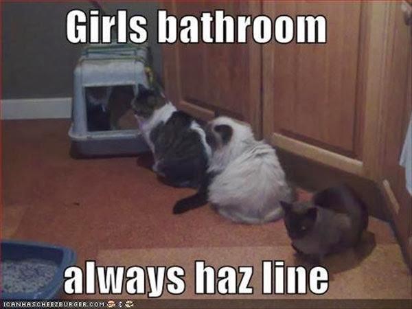 Hình ảnh hài hước về mèo