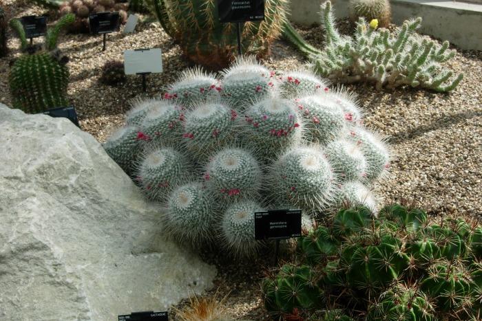 El sustrato ideal para las plantas suculentas - Guia de jardin
