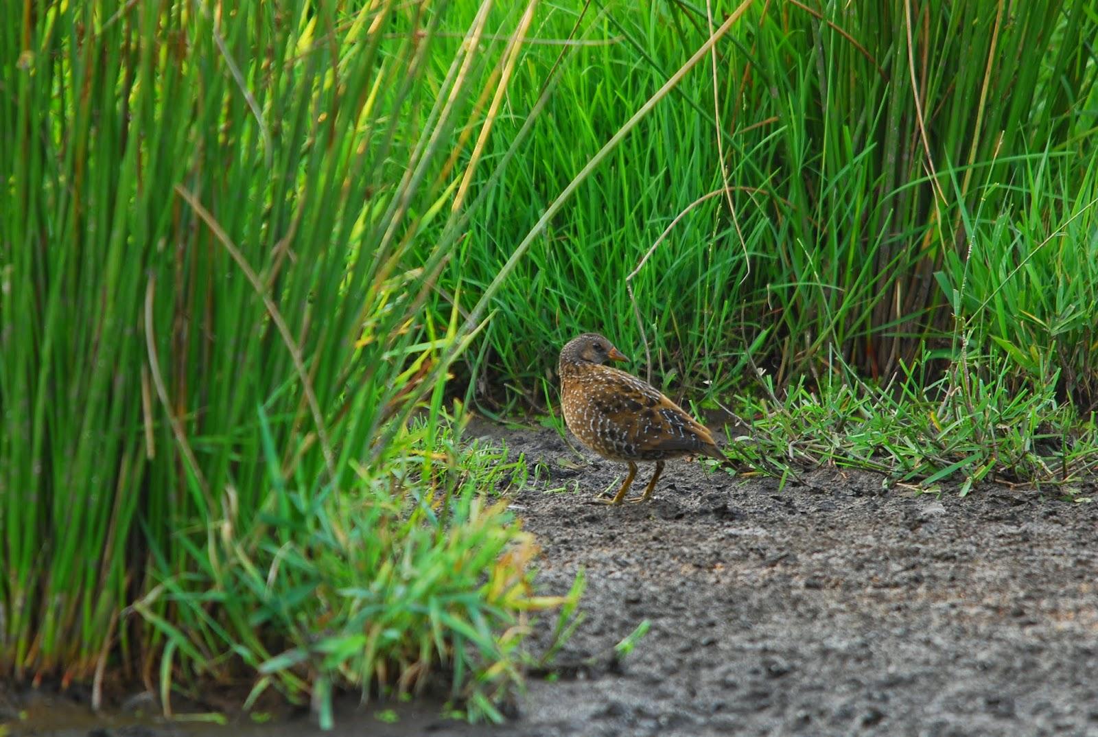 Onderweg: Vogels