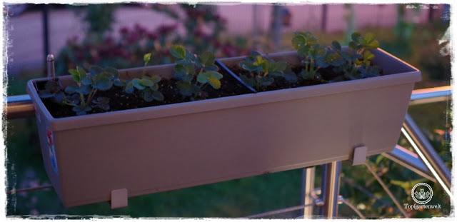 Food- und Gartenblog Topfgartenwelt Produkttest EMSA My City Garden mit Aqua Comfort-System - Anleitung Testbericht Erfahrungsbericht